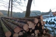 Forstwirtschaft (1)